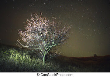 Lonely tree and night sky