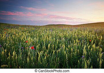 Spring meadow - Spring flowers in meadow Beautiful...