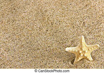 sand and starfish - Close up of beach sand and starfish