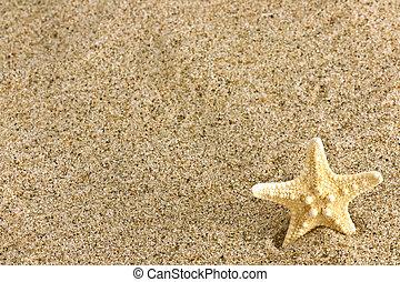 sand and starfish - Close up of beach sand and starfish