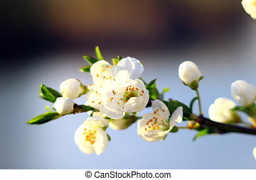 Background with blossom - Nature spring background with...