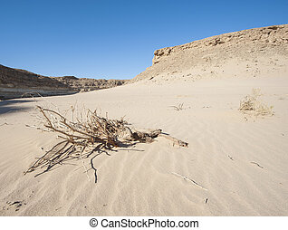 Small dead desert bush on a sand dune slope - Small isolated...