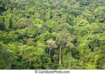 Tropical forest. - Nature landscape Tropical green forest in...