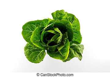 Cos. - Cos salad isolated on the white background.
