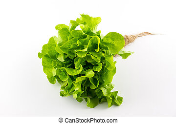 Green oak - Green oak salad isolated on the white background...