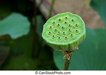 Lotus seed pod on blur lotus leaf background