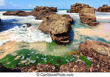 Seagrass plants among the rocks at low tide, Australia -...