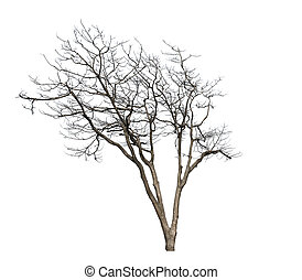 Deciduous trees isolated on a white background