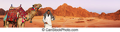 Red rocks on Sinai - bedouin and camel. Red rocks on Sinai...