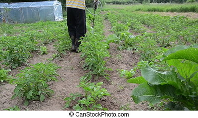 farmer spray plant - Gardener man manual spray pesticides...