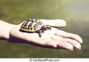 Small turtle in the palm of hand