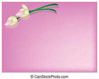 Pink Lotus Flower on A Pink Background - Beautiful Flower,...