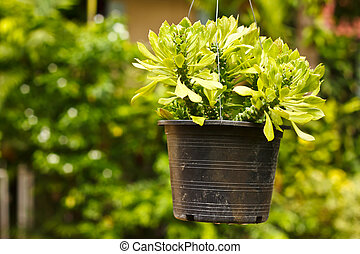 the plant in pot