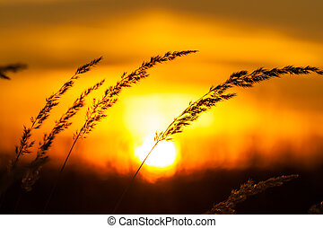sunset field - sunset sunrise behind a hill silhouete grass...