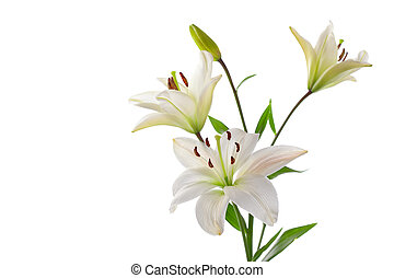 Beautiful white lillies, isolated on white, horizontal...