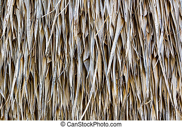 Straw dry background. - Texture of straw.Close up straw dry...