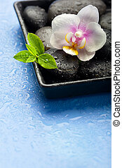 Orchid flower, green leaves and spa stones on wet blue background, with space for text