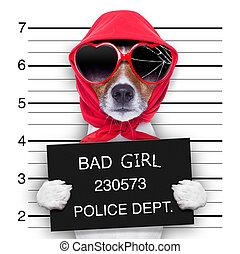 mugshot lady dog - diva lady dog posing for a lovely mugshot