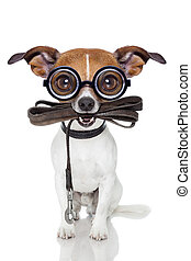 silly crayz dog - crazy silly dumb dog with leather leash...