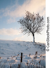 Lone tree on snowy hill - Snow covered countryside in...