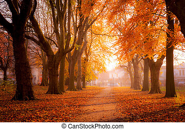 Colorful trees in Park - Beautiful trees in autum colors at...