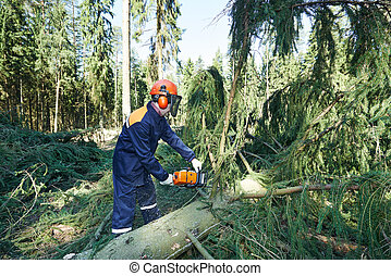 Lumberjack cutting tree branch in forest - Lumberjack logger...