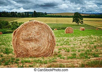 Round Hay Bale - Large round hay bales in the field in...