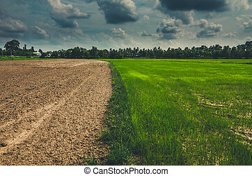 Ploughed field in the rice field in countryside view...