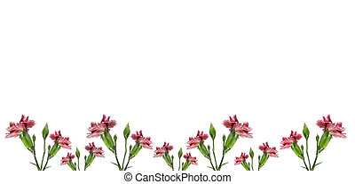 mothers day carnation pink flowers background