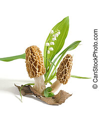 Fresh morels - Two morels and a lily-of-the-valley flower,...