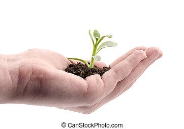 生長, 植物, 手