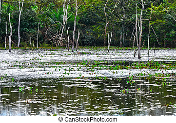 Flooded forest, Pantanal, Mato Grosso (Brazil)