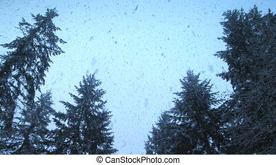 Snow Falling on evergreens - Snow falling on trees, SE...