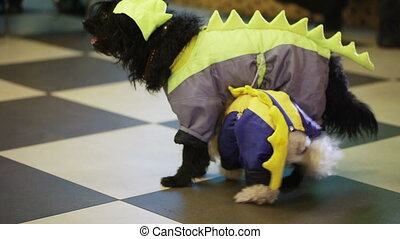 Trained dogs - Performance of trained dogs on childrens...