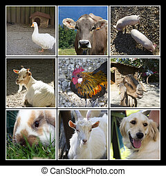 Animals farm collage - A collage with animals farm