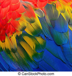 Scarlet Macaw feathers, colorful background texture