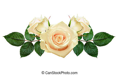 Rose flowers composition