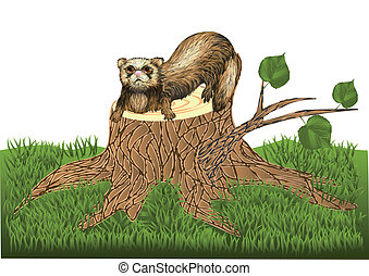 ferret on stump