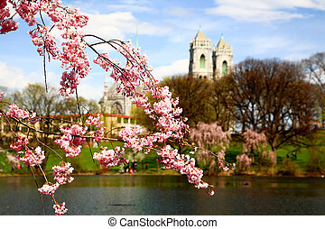 The Cherry Blossom Festival in New Jersey - The Cherry...