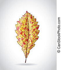 Autumn colorful leaf