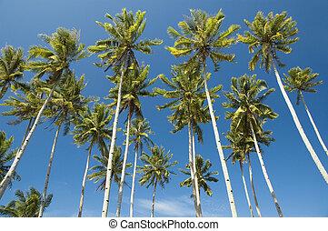 blu, spiaggia, cielo, albero, palma, contro