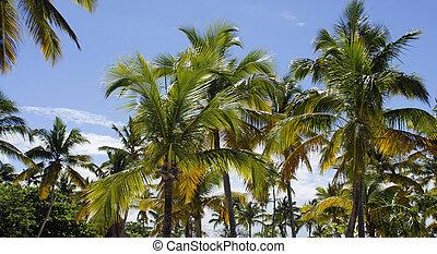 cayo levantado island - caribbean paradise island cayo...