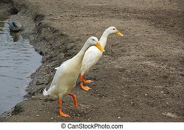 runner duck 01
