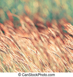 abstract nature background with grass