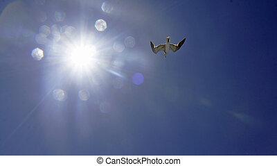 gull - flying gulls in the blue sky