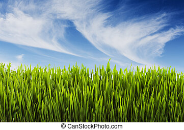 Summer scene - Long lush grass and blue summer sky