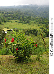 Scenic view in Arenal - Blooming plant in Arenal park