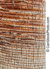 Palm tree bark - close up shot of an intricated palm tee...