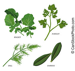 Herbs - Clip-arts of various herbs