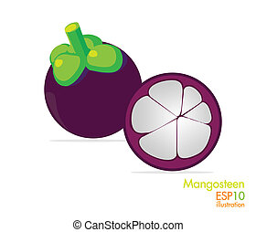 Mangosteen - The fruits are healthful and illustrations.